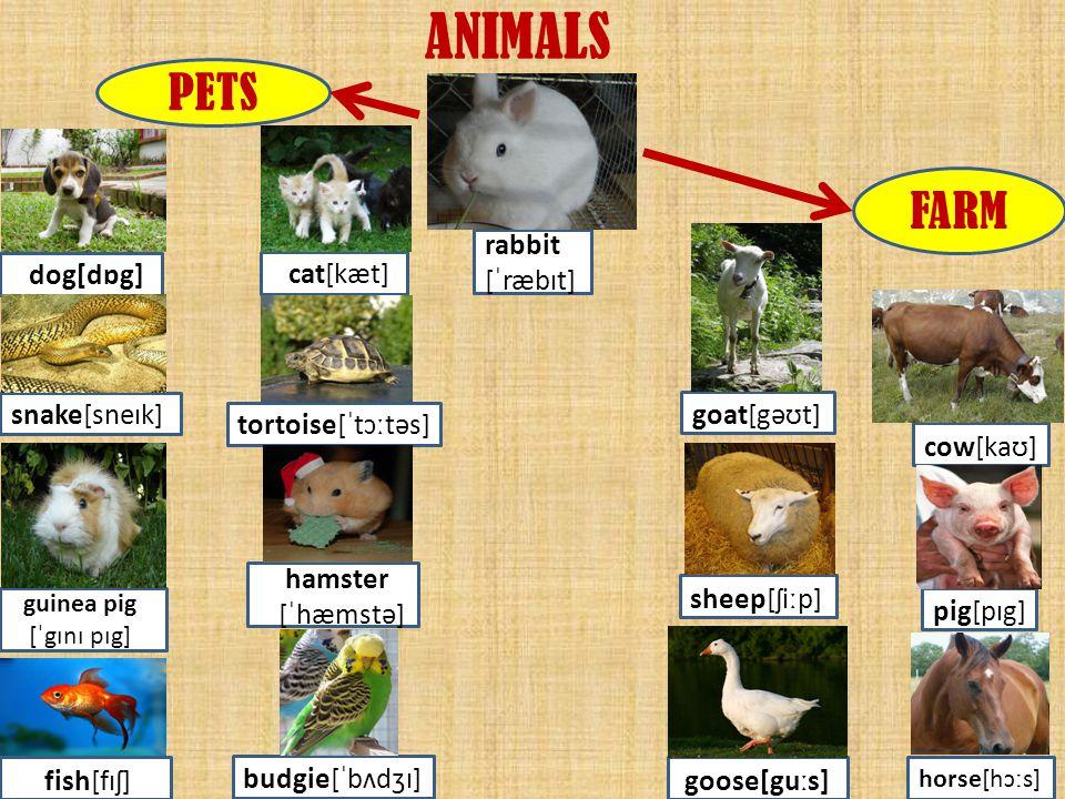 ANIMALS PETS FARM rabbit [ˈræbɪt] snake[sneɪk] goat[gəʊt]